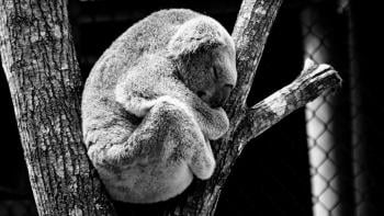 Australia Fires: How did it Affect Animals & How Can We Help?