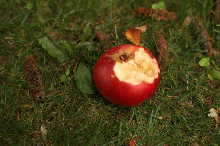An eaten apple on grass