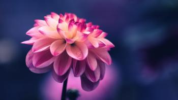 Flower Seeds: The Best Options for a Beautiful Garden