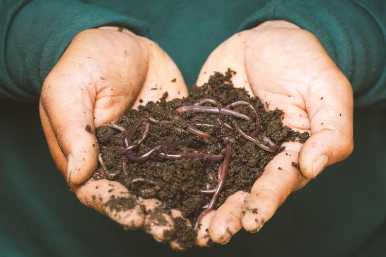 two hands holding dirt and worms
