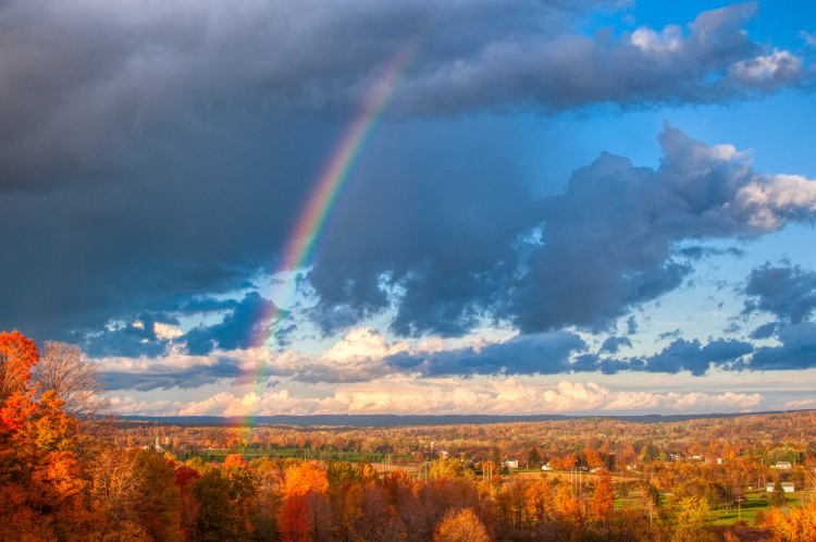 rainbow over a forest
