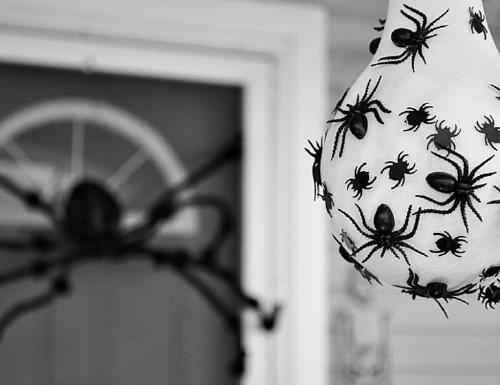 Spider-Egg-Sac