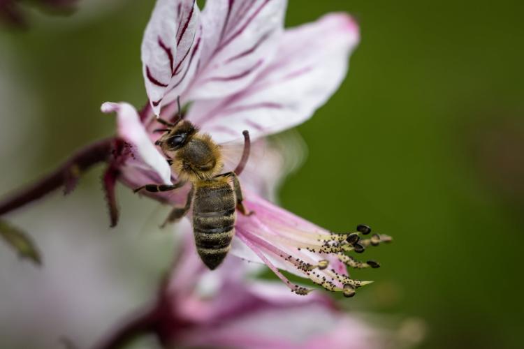 bee collectin pollen on beautiful flower