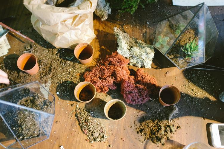 cups filled woth soil and gardening materials