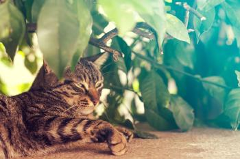 Eco Friendly Pest Control: 5 Top Products to Protect your Plants