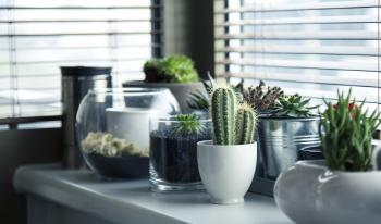 Eco Friendly Pots: Are They a Better Option than Common Pots?