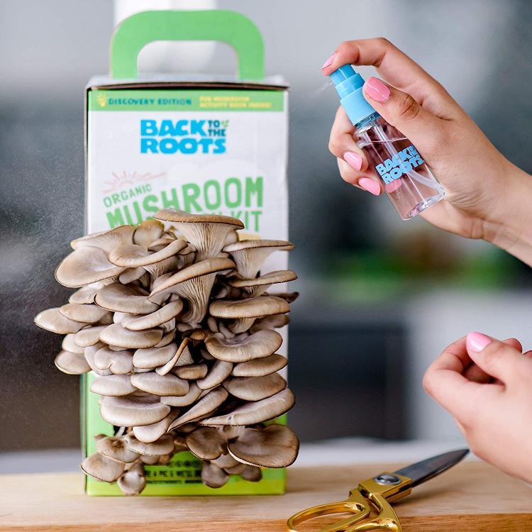mushrooms 3B