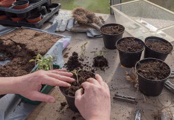 Vegetable Garden Seeds: Grow Your Sustainable Garden!