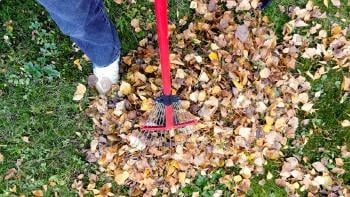 How to make a Compost Pile? All you need to know about it