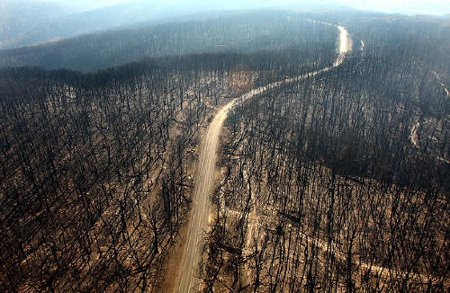 The aftermath of the fires a forest burned