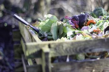 What Can Be Composted? A Complete List of Things You Can Compost