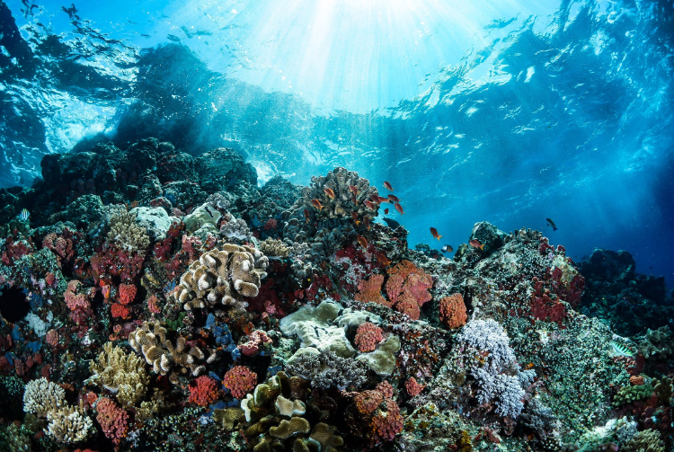 photo from above of a coral reef in Indonesia