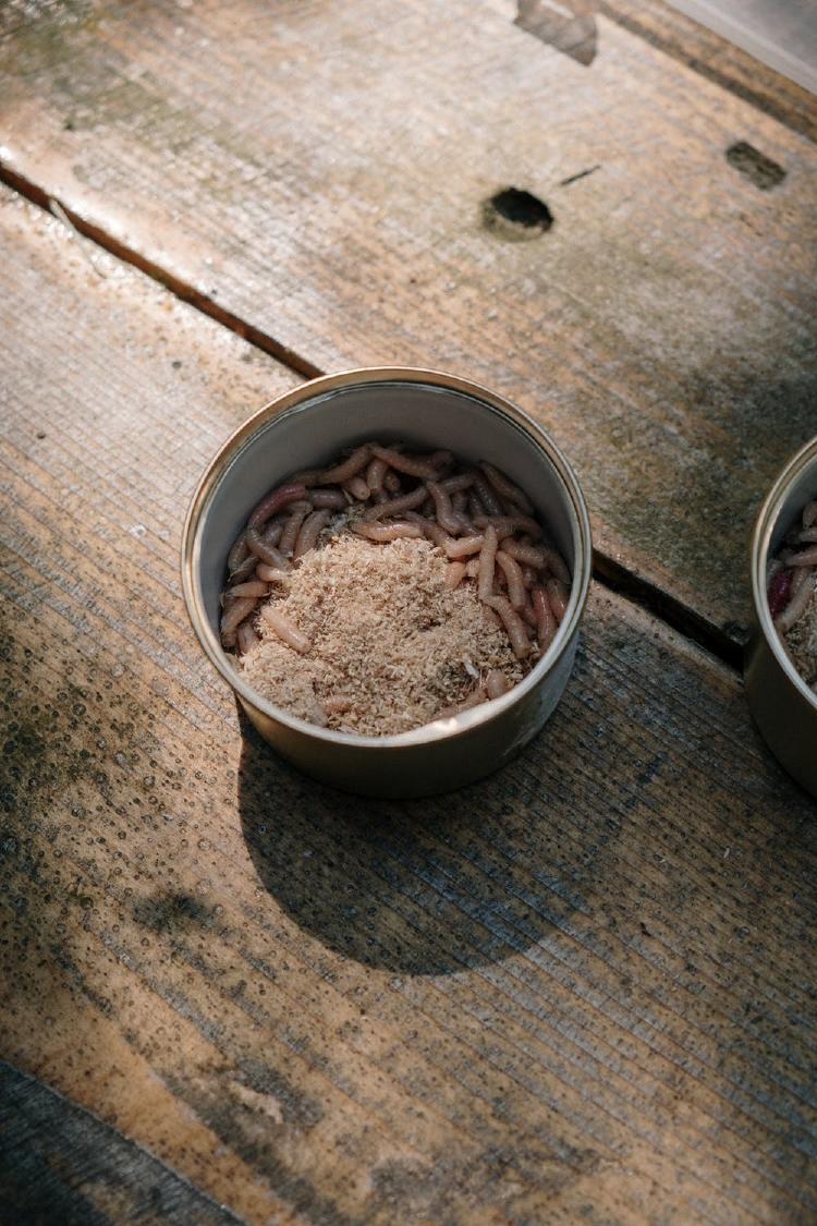 Maggot in compost