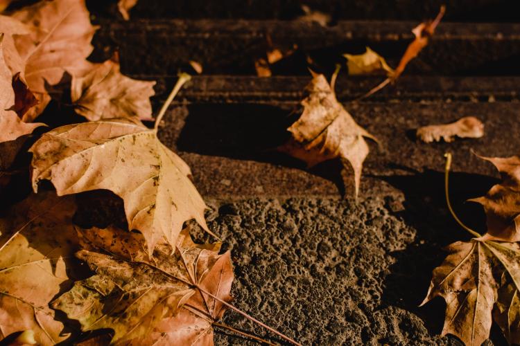 brown dreid leaves