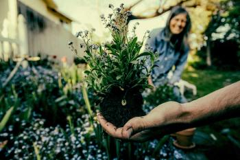 10 Tips and Tricks on how to start a Sustainable Garden
