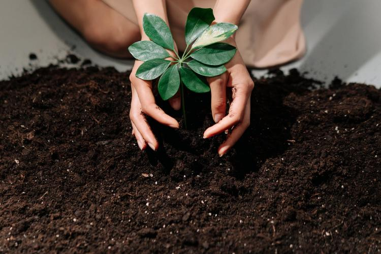 person holding green plant with soil