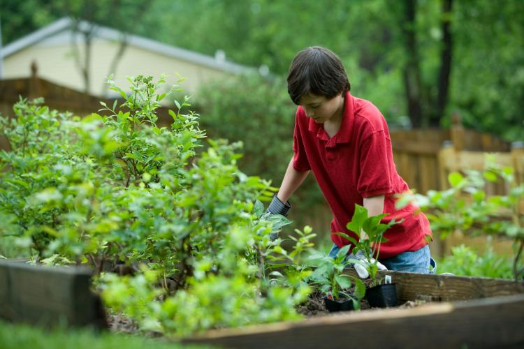 a boy checking the compost