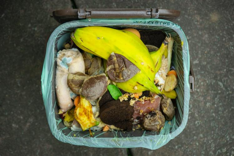 A compost bin full of food waste