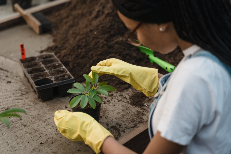 woman in white t-shirt and yellow gloves holding green plant