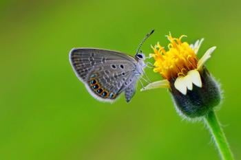 Butterflies: Magical Creatures with Spiritual Meaning