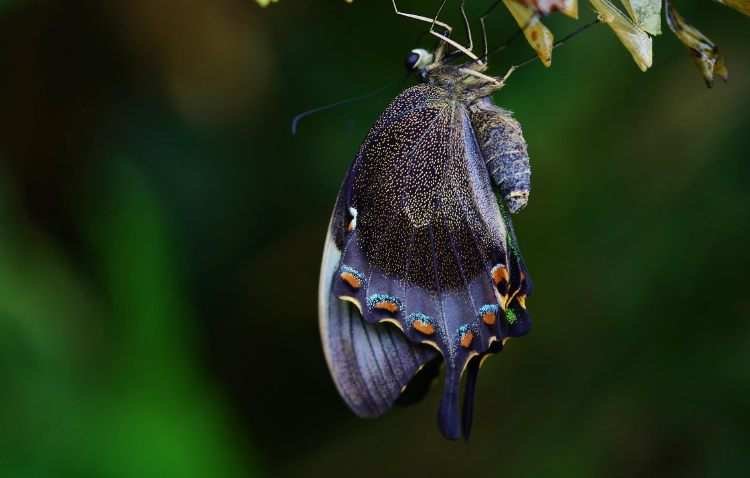 Blue and Black Swallowtail Butterfly Under Green Leaf