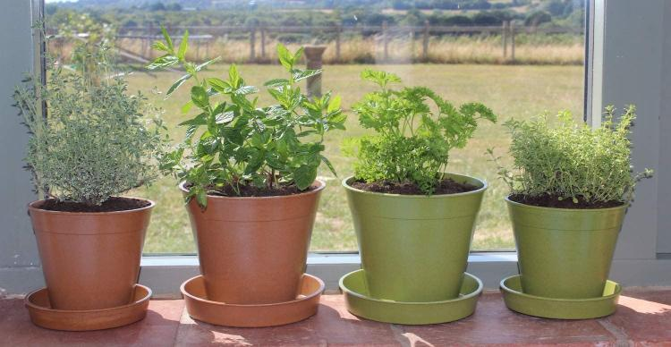 Haxnicks Bamboo Pots Biodegradable