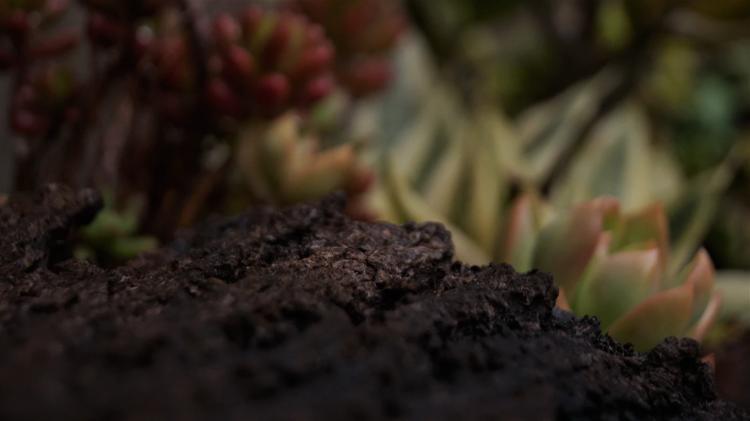 black organic soil