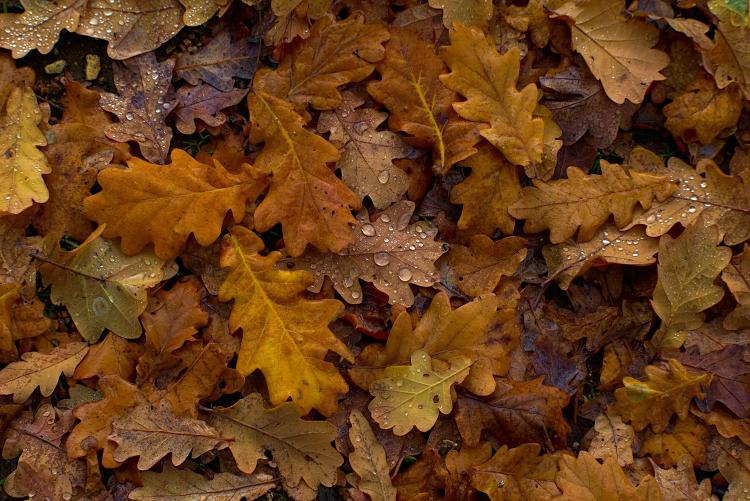 wet brown leaves on soil
