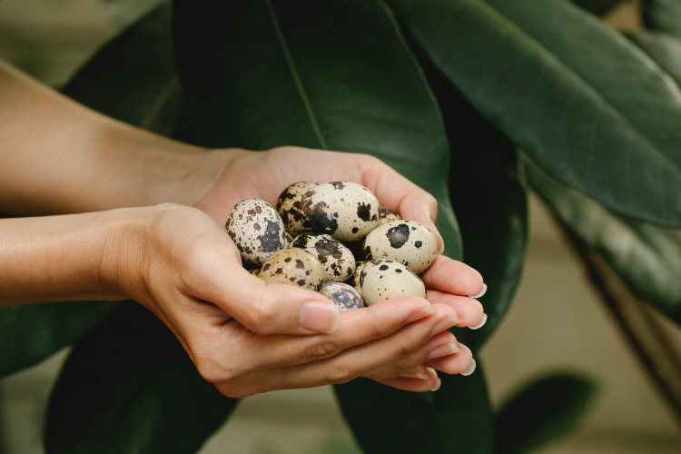 woman with quail eggs in hand