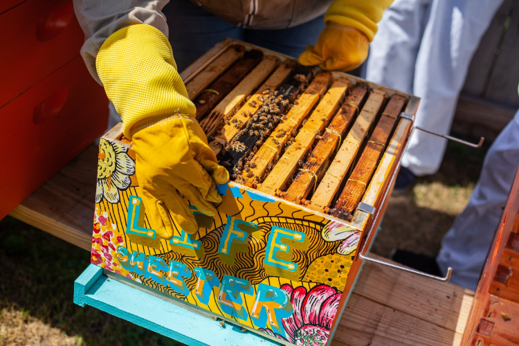man holding wooden crate with bees