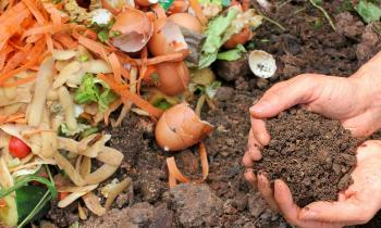 Composting Problems: Types and How to Deal with Them