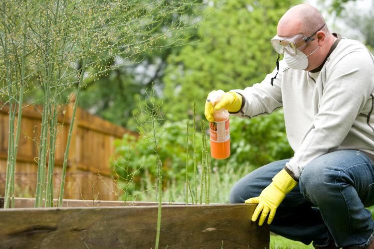 a man with protective gear watering the plants in a garden