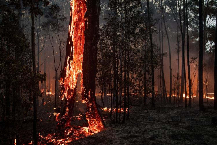 a tree catching fire on one side-c511-44ba-89b1-9f5ea9cf8e14-superJumbo