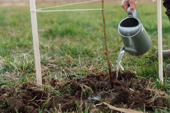 Outdoor Composting 101: Basics and Features to Get you Started