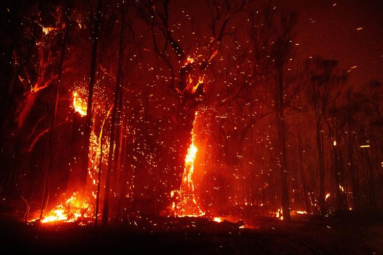 forest on fire