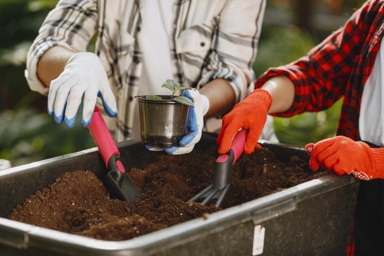 two people removing soil in a bin
