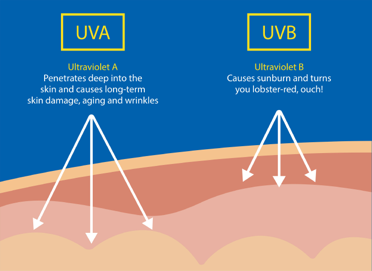 diagram of UVA and UVB sun rays and their skin effects