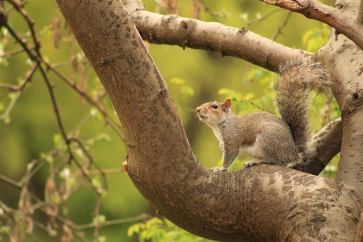 A squirell on a branch