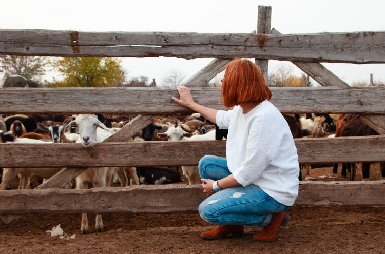 A woman squatting looking to goats over a fence